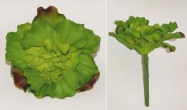 cauliflower 0516051
