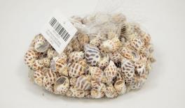 QF18A036 Natural snail decoration 0.5kg 0513013