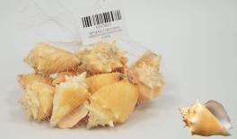 QF18A021 Natural conch decoration 0.5kg 0513015