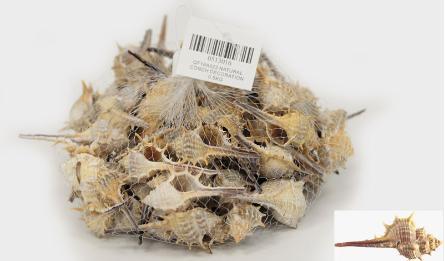 ΔΙΑΚΟΣΜΗΤΙΚΑ ΚΟΧΥΛΙΑ Νο16 QF18A022 0.5kg 0513016