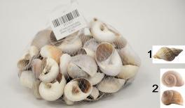 QF18A018 Natural snail decoration 0.5kg 0513017