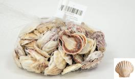 QF18A104 Natural shell decoration 0.5kg 0513019
