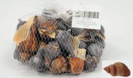 QF18A101 Natural conch decoration 0.5kg 0513022