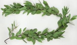 1.5m Eucalyptus Leaf branch 0516106