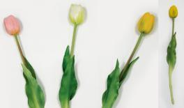 single tulip flower 48pcs/inner box 0516109