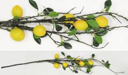 1.1m Big lemon branch 0516111