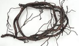 R-205 4m thin vine branch 0516112