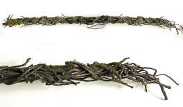 R-118 1.9m wild cane branch 0516113