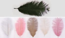 WINGS LARGE 24cm 10pcs / Pack 0517130