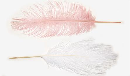 35-40cm ostrich feather 0517897