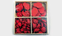 3 size Ladybird 10x13mm(50pcs) 14x19mm(15pcs) 16x24mm(2 grid.6pcs/grid) 0519569